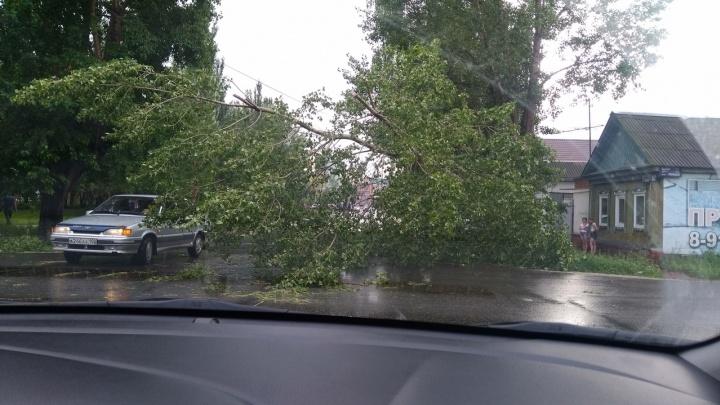 Шквалистый ветер опрокинул дерево и обесточил несколько домов в Стерлитамаке