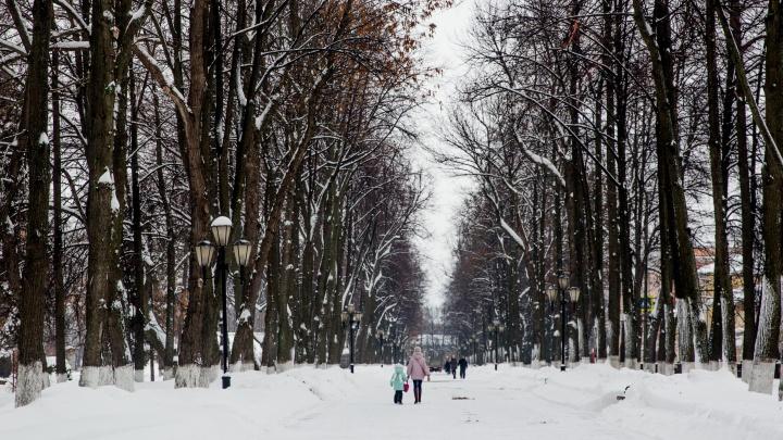 В Ярославском районе задержали извращенца, который в парке снял штаны на глазах у 12-летней девочки