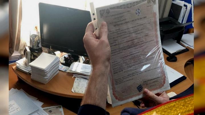 Товар поступал в сетевые магазины: в Волгограде задержали ветврача, выдававшего за взятки липовые справки
