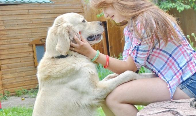 В Уфе наказали собаководов, нарушавших правила выгула питомцев