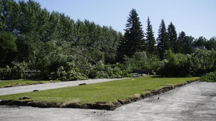 Власти пообещали высадить ивы на месте спиленных деревьев в сквере Славы