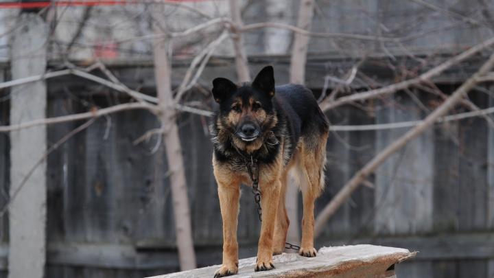 Екатеринбуржцу дали 320 часов обязательных работ за жестокое убийство собаки