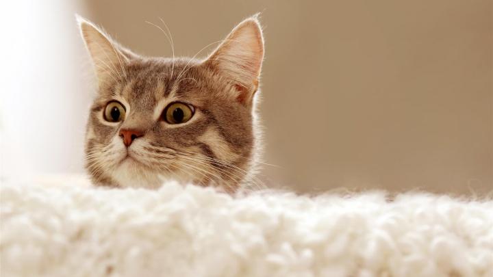 Новосибирцев попросили показать, с кем они живут: фотоконкурс на самых милых домашних животных