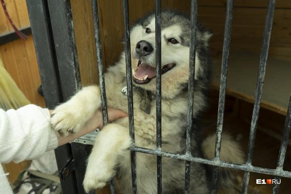 Рядом с хаски поселят собак служебных пород