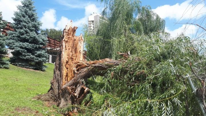 В Волгограде ураган валит деревья, бьёт машины и останавливает трамваи: онлайн-трансляция