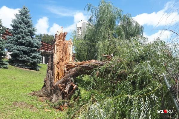О деревопаде сообщают с различных концов Волгограда