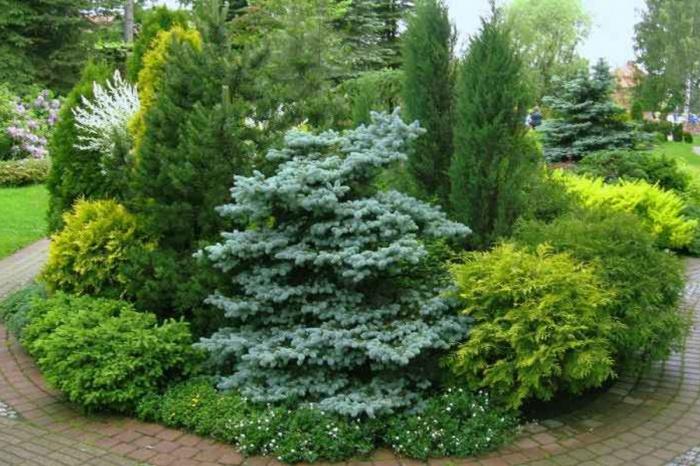 Наступил благоприятный период для посадки хвойных деревьев в саду