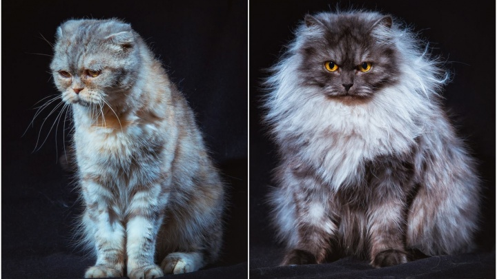 Кому пушистого друга? Бездомные уральские коты стали фотомоделями, чтобы найти новых хозяев