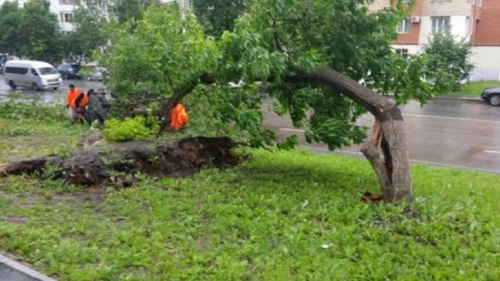 В одном из районов Уфы ветер повалил пять деревьев