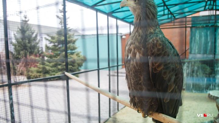 «Успеем до холодов»: хищники из волгоградского зоосада переезжают в Волго-Ахтубинскую пойму