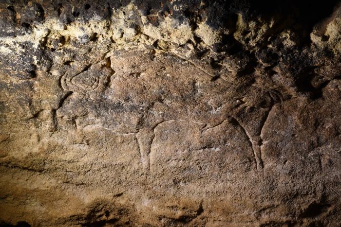 Бизон, о прошлом которого спорят учёные, обнаружен более века назад в пещере Ля Грэз во Франции