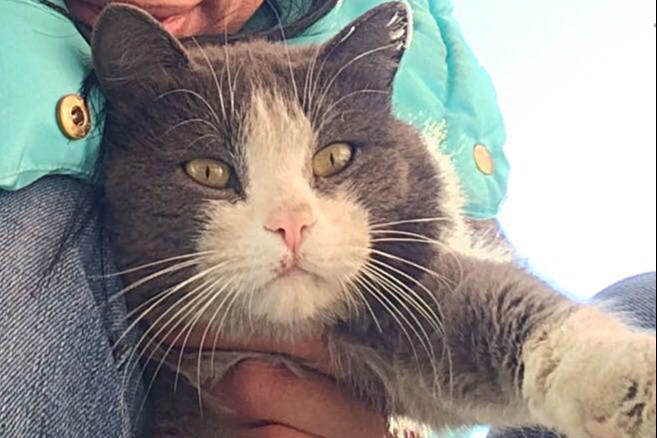 Мурчат и пашут: красивые и суровые коты, которые живут на работе у новосибирцев