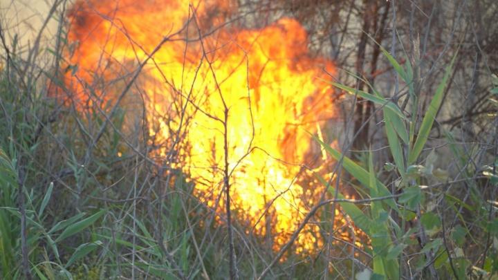 В Ростове возле ТЦ «Рио» загорелся камыш