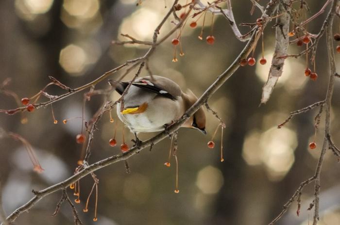 Волонтёры заявили, что готовы принимать почти всех птиц, но есть небольшие исключения