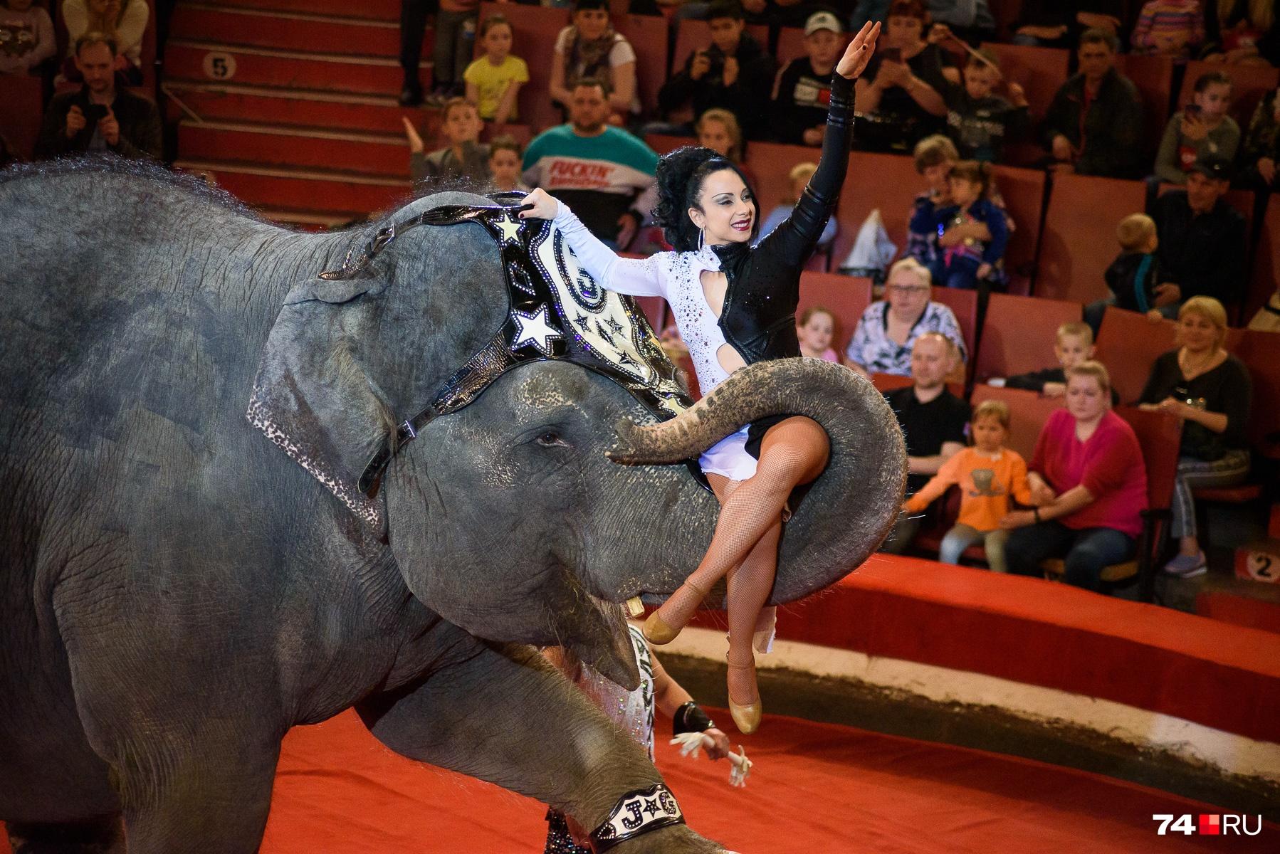 Слонихи — родом из Индии, были вывезены оттуда много лет назад