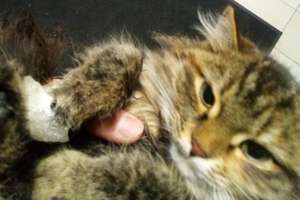 Спасенной кошке теперь нужны любящие хозяева