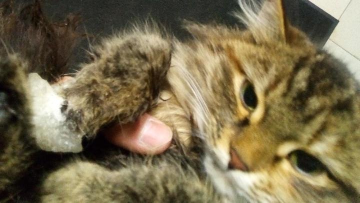 Лапу вырубали вместе с куском льда: екатеринбуржец спас кошку, которая примерзла к крыше