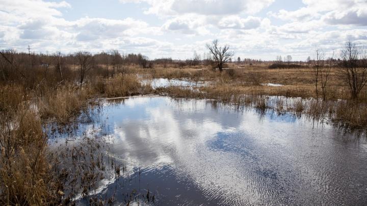 «Она была без одежды»: в Ярославле в пруду всплыло тело женщины. Первые подробности