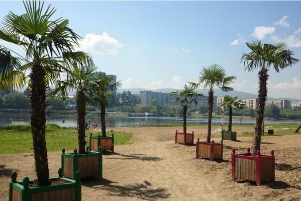 Эти пальмы украшали городской пляж