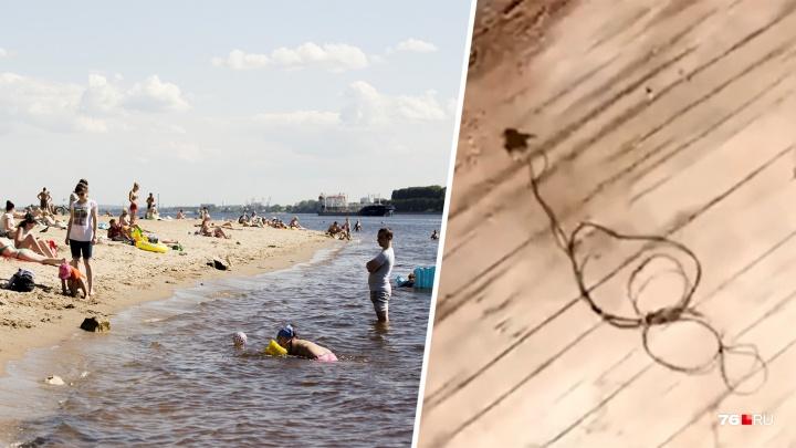 «Это реально тварь»: ярославцы сняли на Волге червей-паразитов. Учёный объяснил, чем опасна находка