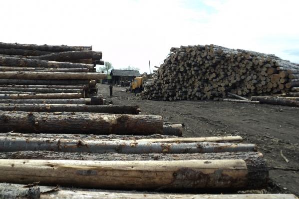 481 кубических метров срубленного леса оказались непригодными