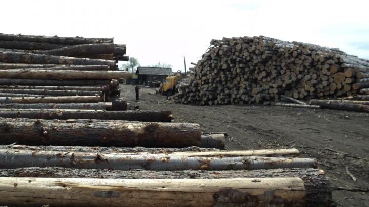В крае приостановили работу пункта приёма и отгрузки древесины из-за вредителей в коре