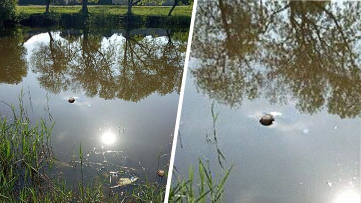 Утонул или помогли? В кинельском озере нашли труп мужчины