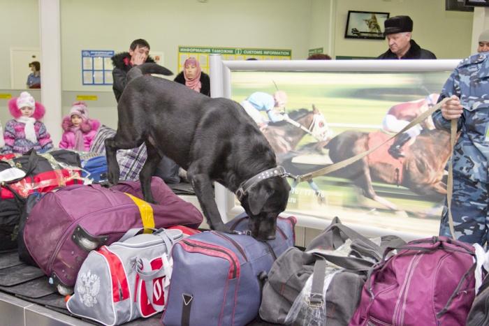 Обнаружила запрещённые вещества в чемодане у мужчины служебная собака