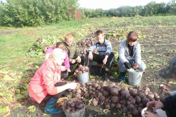 Большая часть урожая Утичёвской школы станет школьными обедами, излишки продадут на ярмарке