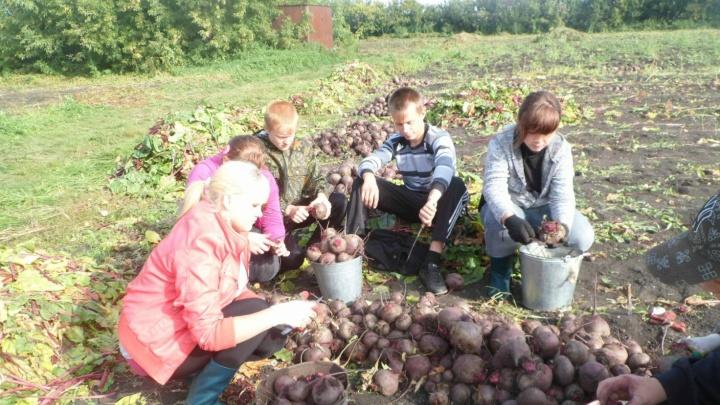 Зауральскую школу, где зарабатывают продажей овощей, сравнили с московской гимназией