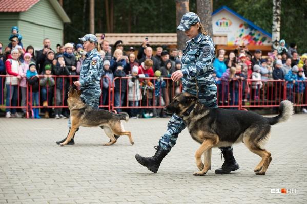 Силовики устроили парад и показательные выступления