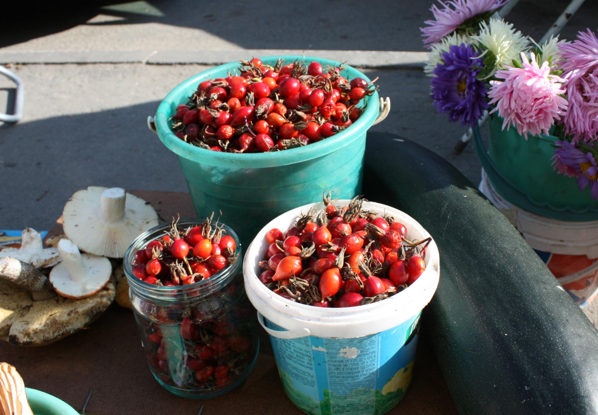 Плоды шиповника — кладезь полезных витаминов, особенно богат он на витамин С