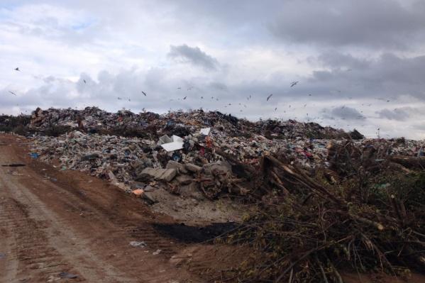 Местные жители говорят, что из-за городской свалки в Левенцовском постоянно воняет