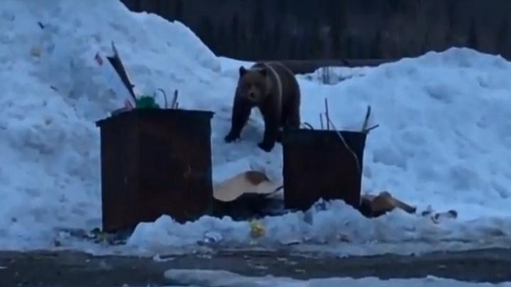 Дачник под Красноярском встретил бесстрашного медведя и заснял на видео