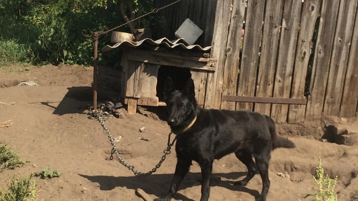 В Волгоградской области собака загрызла годовалого ребенка