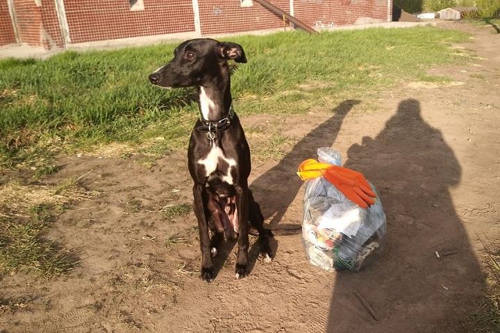Фотографии с питомцами и с собранным на прогулке мусором предлагают публиковать в соцсетях