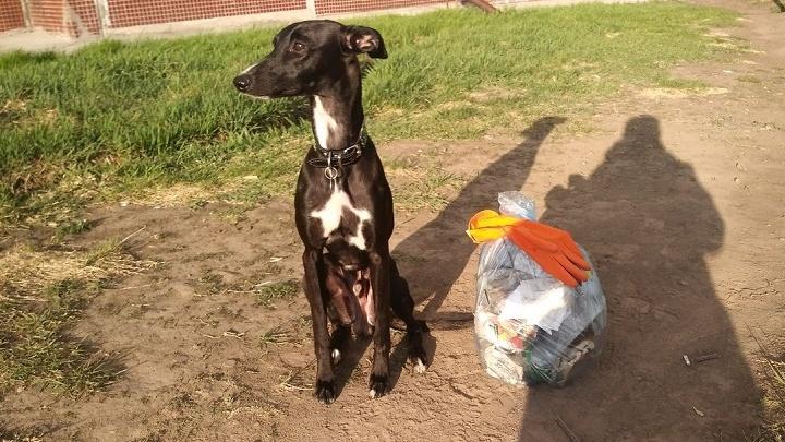 Новосибирцы с собаками устроили флешмоб — они собирают бутылки и фантики на прогулках