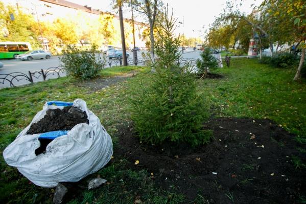 В Тюмени с начала года посадили молодые березы, ивы, яблони, рябины и другие породы