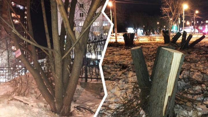 В Челябинске второй раз за сутки массово вырубили деревья. Власти оказались не в курсе