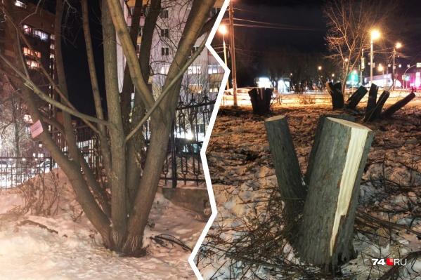 Деревья вырубилинаперекрёстке улиц 40-летия Победы и Братьев Кашириных