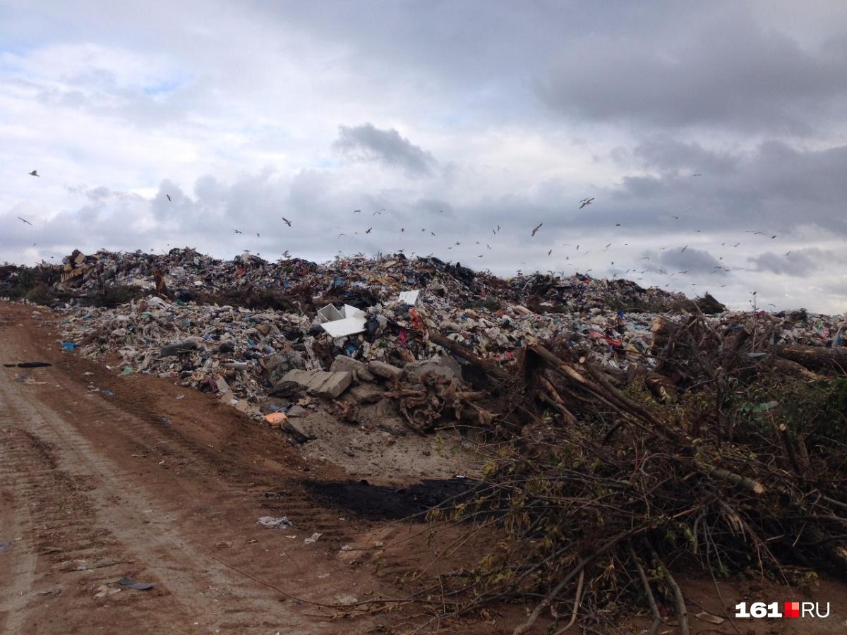 Директор предприятия разрешал сваливать отходы за пределами полигона