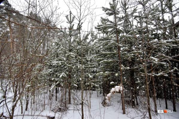 Законно рубить елки можно только платно и в тех местах, которые указывают в лесничестве