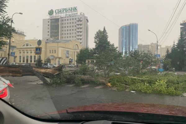 Деревья упали на пересечении улиц Революции и Ленина