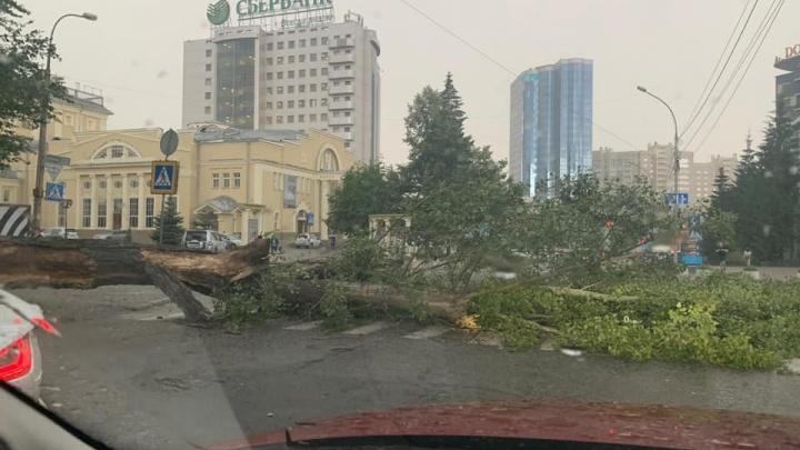 Буря в Новосибирске: ливень топит улицы, ветер валит деревья