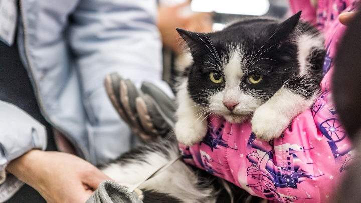В Новосибирске собирают базу доноров для кошек и собак: 15 хозяев уже согласны помочь чужим животным