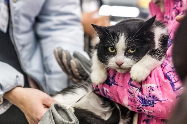 Сейчас фонд тоже помогает владельцам животных искать для них доноров, но это не автоматический процесс