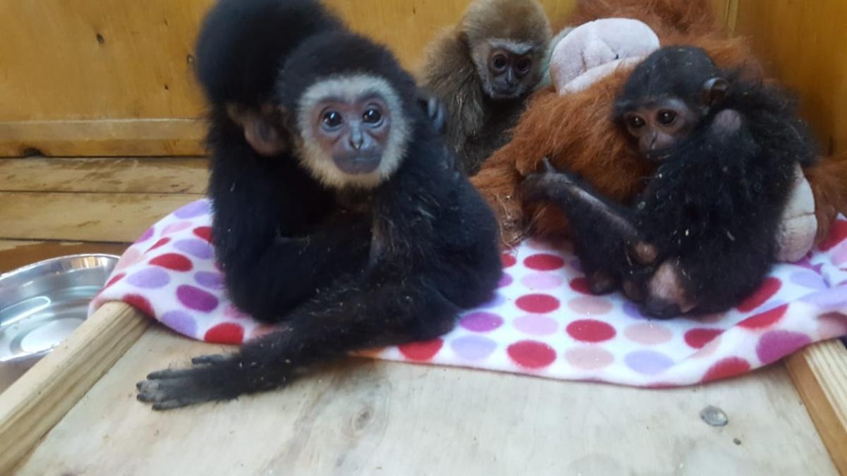 У контрабандистов изъяли шесть обезьянок