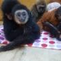 Челябинские таможенники обнаружили обезьянок, которых пытались провезти под видом кошек