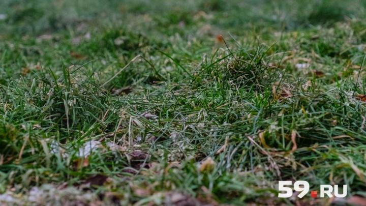 В Прикамье ожидаются заморозки до -2 градусов