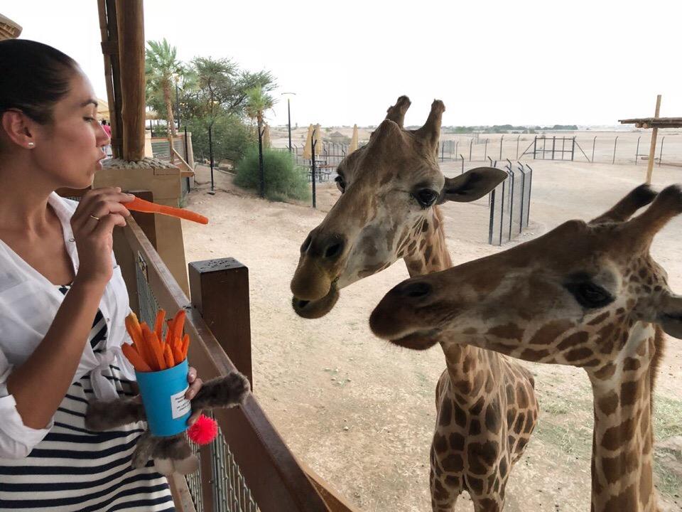Готовьтесь провести в зоопарке несколько часов. Животных нельзя смотреть в спешке